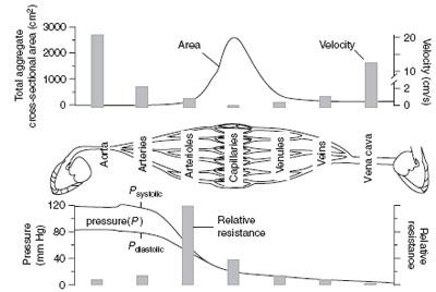 epub Über die Einführung von Fluor in organische Verbindungen