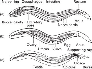 ... excretory and nervous system. (b) Reproductive system of a femaleReptile Excretory System