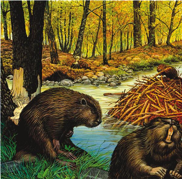 Los castores y los topos for Castor habitat
