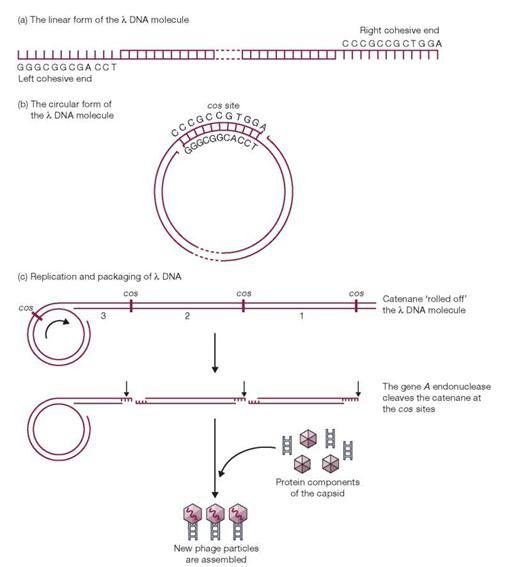 Ebook and brown ta dna free download cloning gene analysis